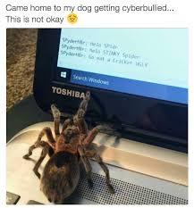 I Saw A Spider Meme - the best brock memes memedroid