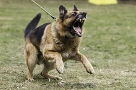 Types Of Dogs The Dog Trainer Managing 5 Key Types Of Dog Aggression Quick