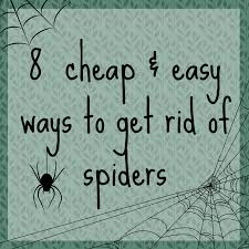 Are Spiders Attracted To Light How To Keep Spiders Away A Thrifty Mrs