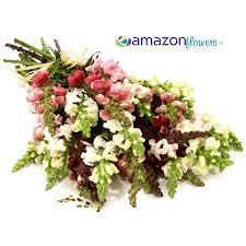 fresh flowers in bulk wholesale snapdragon bulk snapdragon flowers buy snapdragons