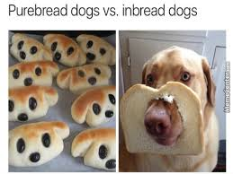 Loaf Meme - bread memes best collection of funny bread pictures