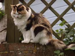 Keep Cats In Backyard Keeping Pets Safe Poisonous Plants Hgtv
