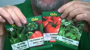 chia herb garden gardening ideas