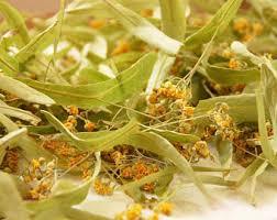 linden flower linden flowers etsy