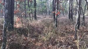 bigfoot in the pine barrens youtube
