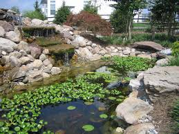 top tips for a perfect backyard koi pond koi ponds in rockville