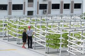 Urban Farming In Singapore Has Moved Into A New High Tech Phase