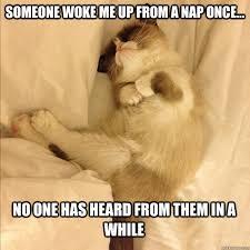 Sleepy Cat Meme - sleeping cat memes image memes at relatably com