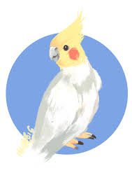 cartoon cockatiel cockatiel clipart sketch pencil and in color cockatiel clipart