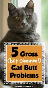 Bed Bugs On Cats What You Need To Know About Your Cat U0027s