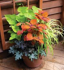 container gardening in india google search beautiful balconies