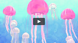 3d toon jellyfish motion graphic project cartoon animation