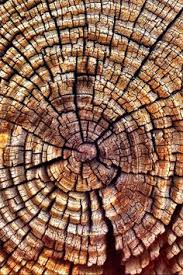 looking inside wood the rings are yrs the tree been alive