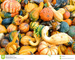 free halloween orange background pumpkin halloween fall pumpkin and squash background stock photography