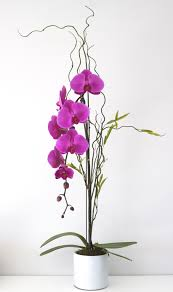 la orchidia plants flower delivery los angeles ca