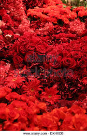 different reds bright color monochromatic reds stock photos bright color