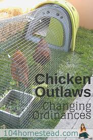 chicken outlaws farming homesteads and coops