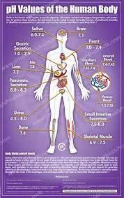 Anatomy Pancreas Human Body Understand Your Body Pancreas Correction The Body Produces