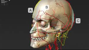 Human Anatomy Careers Gale Interactive Human Anatomy