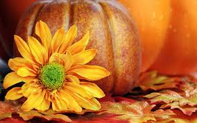 halloween autumn background beautiful yellow flower and a big pumpkin for halloween