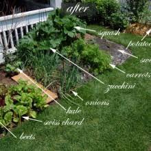 Front Yard Vegetable Garden Ideas Front Yard Vegetable Garden One Month Update Vegetable Garden