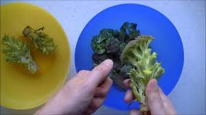 comment cuisiner le brocolis comment preparer des brocolis how to prepare brocoli