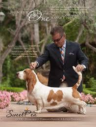 afghan hound judith light top ten hounds u2013 breed u2013 dn dog news magazine top ten list