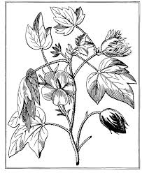 coloring pages wild rose