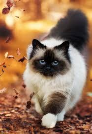 beautiful kittens 88 best beautiful cats images on pinterest kitty cats cute