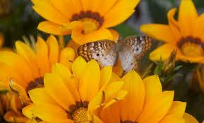 butterflies in bloom bay nature