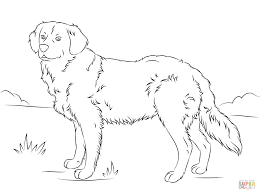 golden retriever coloring free printable coloring pages