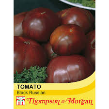 native russian plants tomato u0027black russian u0027 heritage thompson u0026 morgan