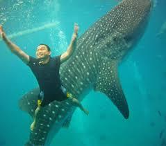 coyxxx meek giants under the sea whale shark encounter in oslob