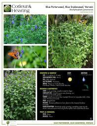 native florida plants low maintenance groundcovers cotleur u0026 hearing landscape companycotleur u0026 hearing