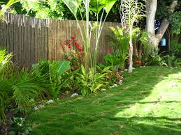 easy garden border treatment using tropical plants outdoors