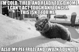 Cold Meme - image 6 david fry quote cat meme mashup im cold etc also my pee