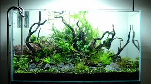 Mountain Aquascape Hypnotic Timelapse Of Aquascaping A Planted Aquarium Boing Boing