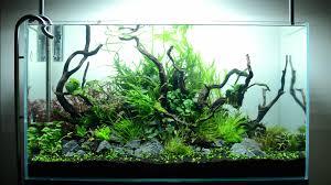 Aquascape Com Hypnotic Timelapse Of Aquascaping A Planted Aquarium Boing Boing