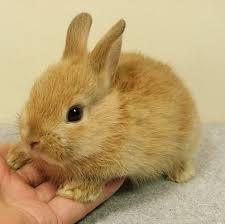 rabbit bunny bunny rabbit theorist