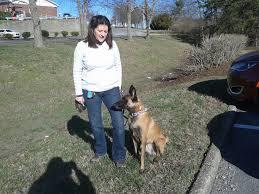 belgian sheepdog michigan abmr malinois rescue blog