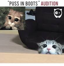Puss In Boots Meme - puss in boots meme 28 images puss in boots audition pass meme on