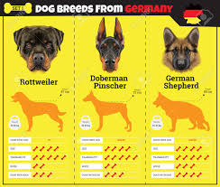 Types Of Dogs Dogs Breed Vector Infographics Types Of Dog Breeds From Germany