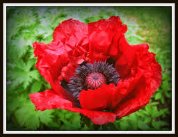 mothering with mindfulness lest we forget