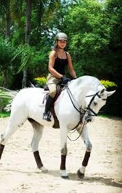Nice Hourse 4035 Best Horses Images On Pinterest Horses Beautiful Horses