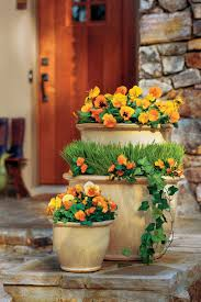 How To Decorate A Pot At Home Pansies U0026 Viola Gardens Southern Living