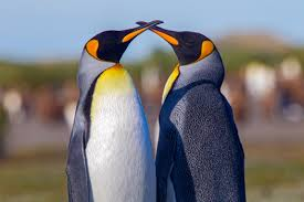 penguin wildlife conservation network