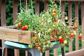 balcony vegetable garden containers ideas home inspirations