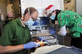 Comfort Dental Loveland Dentists Offer Free U0027care Day U0027 Loveland Reporter Herald