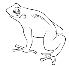 free frog coloring pages print color ideas
