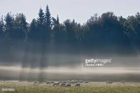 siege thiriet matin stock photos and pictures getty images